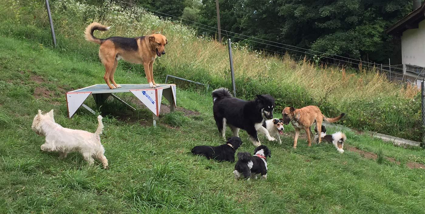 hunde-gruppe